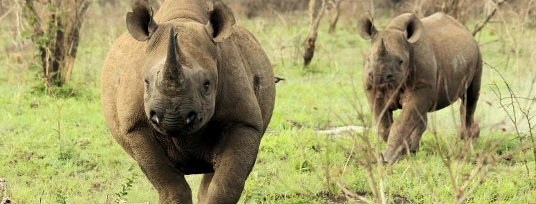 Rhino Tracking At Thanda Safari With The Specialists