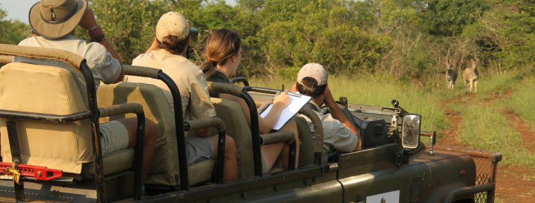 JOIN AN AFRICAN WILDLIFE RESEARCH PROGRAMME AT THANDA SAFARI